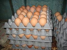 How to Sell Chicken Eggs - Selling Chicken Eggs From Your Small Farm