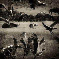 hunting...