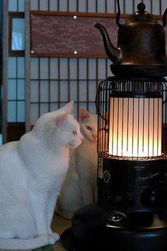 【冬の風物詩】 特等席に陣取る猫さん達の画像集                                                       …