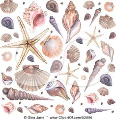 52896-Royalty-Free-RF-Clipart-Illustration-Of-A-Background-Of-Conch-Scallop-Starfish-And-Other-Sea-Shells-On-White.jpg (450×466)
