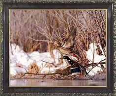 Pair of Wild Mallard Ducks (Flying) Bird Wall Decor Mahogany Framed Picture Art Print (20x24) by Impact Posters Gallery, http://www.amazon.com/dp/B01MT0OV90/ref=cm_sw_r_pi_dp_x_oHDvzb08RBZQD