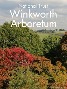 Our family day out to the National Trust Winkworth Arboretum, Surrey in autumn