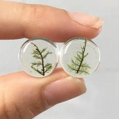 """12mm Fern Moss Ear Plugs Gauges Pair 1/2"""", Nature Gifts, Real Plant Plants Nature Pressed Flowers Fairy Body Jewelry :MAGIC EARS by {118} by MONIHOLLY118 on Etsy https://www.etsy.com/listing/482819225/12mm-fern-moss-ear-plugs-gauges-pair-12"""