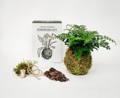 Ever wondered how to make a kokedama? We'll show you exactly how to make a kokedama 'string garden' in these step by step instructions with photos. String Garden, Unique Plants, All Plants, Make Your Own, Make It Yourself, Plant Crafts, Love Garden, Garden Shop, Unique Gardens