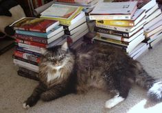 Nikki. Firmly, a feline library advocate, of Lesa's Book Critiques fame: http://lesasbookcritiques.blogspot.com/2013/04/national-library-week-library-stories.html