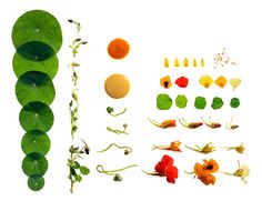 Marin Caruso | Food and Still Life photographer based in San Francisco, Los Angeles, and New York