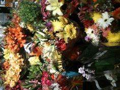 Cerca de la Primavera, flores hermosas (flowers)