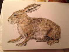 Hare-ink and watercolour