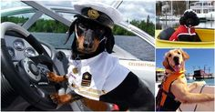 Set Sail For Cuteness! 16 #Nautical #Dogs On The High Seas