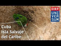 Cuba, Isla Salvaje del Caribe - Los Secretos de la Naturaleza - YouTube