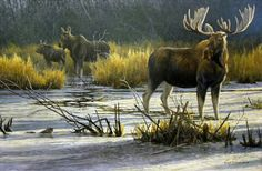 "Robert Bateman ""The Moose Family"" - Canadian Wildlife Federation exclusive print celebrating 50 years. Wildlife Paintings, Wildlife Art, Animal Paintings, Canadian Animals, Canadian Wildlife, Bull Moose, Moose Art, Moose Hunting, Hunting Art"