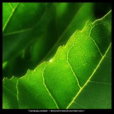 The warm sun is bringing life for another day. Plant Leaves, Sun, Warm, Plants, Life, Plant, Planets, Solar