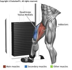 ADDUCTORS -  CABLE HIP ADDUCTION