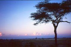 malawi_sunset_nature.jpg (450×300)