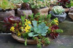 succulent container gardens photo gallery | Succulent container.