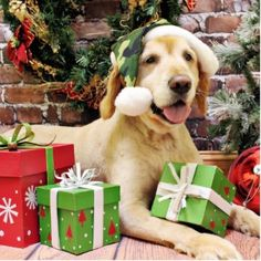 Yellow Labrador Retriever Merry Christmas Card Puppy Holiday Dogs Santa Claus Dog Puppies Xmas Labs