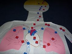 heart and circulatory system Similar to the red/blue yarn lesson, this could even be done with paper dots/scraps from the paper puncher