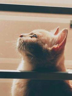 Mèo buồn, mèo cô đơn