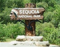 Sequoia National Park California - Bing Images