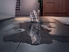 Incredible Photo Manipulations For Inspiration - 6 Tiger Pictures, Print Pictures, Tiger Wallpaper, Pink Emoji Wallpaper, Animal Wallpaper, Canvas Wall Art, Canvas Prints, Pet Tiger, Decorating With Pictures
