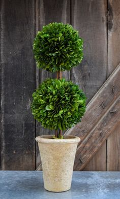 """This Double Ball Preserved Boxwood Topiary is 20 inches tall. Its natural wood """"stem"""" is secured in a clay pot. These boxwood topiary make a a statement by bringing the outdoors in, adding stunning greenery in a contemporary style. Topiary Plants, Boxwood Topiary, Topiary Trees, Topiary Decor, Outdoor Topiary, Boxwood Garden, Topiary Garden, Boxwood Landscaping, Landscaping With Rocks"""