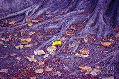 Nature Photograph - Fallen Leaves by Neha Gupta