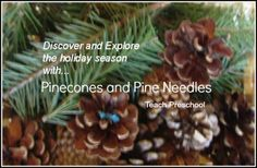 Discover and explore the holiday season with pinecones and pine needles by Teach Preschool