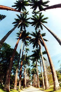 Jardim Botânico - Rio de Janeiro #RJ #Brasil #Brazil