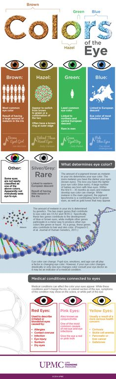 Find out what determines eye color and learn about some medical conditions associated with your eyes in this infographic from the UPMC Eye Center.