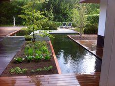 Pond in garden Www.stamhoveniers.nl
