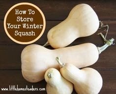Long Term Storage for Winter Squash If you recall from posts I made late last spring, we had a bumper crop of buttercup and butternut squash. We even got a few acorn squashes. It was a beautiful thing. Fast forward to now. Last week I… Read more › Winter Vegetables, Fruits And Veggies, Real Food Recipes, Fall Recipes, Buttercup Squash, Do It Yourself Food, Winter Plants, Winter Garden, Squashes