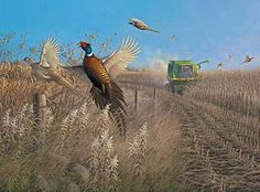 Flying Colors-Pheasants by Michael Sieve  |  Wild Wings