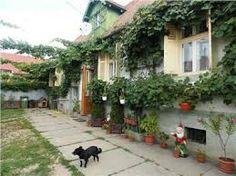 Imagini pentru cristian sibiu Romania, Plants, Christians, Plant, Planting, Planets