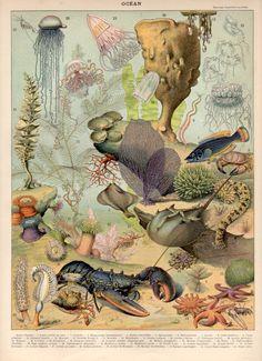 1897 Antique Ocean Print, Lobster, Jellyfish, Starfish illustration, Larousse Large Size 115 YEARS OLD Nautical Decor Sealife Wall Art Art And Illustration, Antique Illustration, Fauna Marina, Kunst Poster, Stock Art, Antique Prints, Sea Creatures, Natural History, Art Prints
