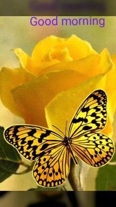 Wallpaper Nature Flowers, Beautiful Flowers Wallpapers, Flower Phone Wallpaper, Beautiful Nature Wallpaper, Butterfly Wallpaper, Butterfly Art, Very Beautiful Flowers, Beautiful Gif, Beautiful Fantasy Art
