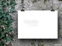 One hanged horizontal paper sheet frame with clips on grey concrete wall background with ivy nearby