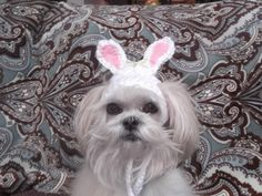 EASTER BUNNY Dog hat  Humorous  2 to 20 lb by StylinDogsBoutique, $10.00