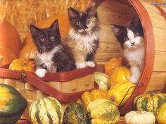 Three kittens in a basket - Cats Wallpaper ID 1422100 - Desktop Nexus Animals