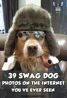 252771bf8 Swag Dog Photos Funny Talking Dog, Dog Quotes Funny, Funny Dogs, Crazy  People