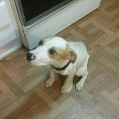 @Regrann from @karebear2795 -  @Regrann from @rescuedogsrocknyc -  We got a plea recently asking if we could help this 4 month old baby get immediate medical help & out of an abusive situation.  His previous owners beat him & apparently Animal Control had been to the home several times after receiving complaints. The day Thor came to us we were told he had parvo & the owner was going to shoot him :( The volunteer who picked him up said he was being hit when she was there to get him. We could…