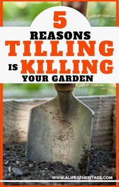 No-Till Gardening and 5 reasons it is so important for the health of your soil (and you!) to STOP tilling your garden!