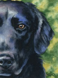 Flat Coated Retriever Dog Watercolor Art Print Signed by Artist DJ Rogers