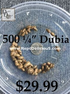 500 count Dubia SALE
