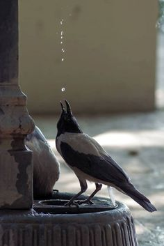 Best Photographs Pet Birds crows ravens Suggestions If you share your daily life — and home — with a puppy bird, containing mess and keeping the cag The Crow, Love Birds, Beautiful Birds, Animals Beautiful, Animals And Pets, Cute Animals, Funny Animals, Jackdaw, Crows Ravens