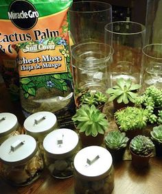 Succulent Terrariums DIY I still have some I need to plant, maybe I'll try… - Modern Succulent Gardening, Succulent Terrarium, Planting Succulents, Succulent Ideas, Indoor Gardening, Terrariums Diy, Terrarium Ideas, Do It Yourself Projects, Raised Garden Beds