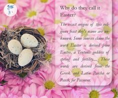 Easter is just around the corner so decided to search out some basic informations about the festival. We google about it and created some good posts to share with all checkout the facts about the Easter. ---- Why do they call it Easter? The exact origins of this religious feast day's name are unknown. Some sources claim the word Easter is derived from Eostre a Teutonic goddess of spring and fertility. ... These words are derived from the Greek and Latin Pascha or Pasch for Passover…