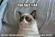 #GrumpyCat #Memes #44