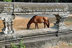 Cambodia-2307 - Tourist horse by archer10 (Dennis) on Flickr.