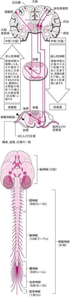 Brain Tricks, Holistic Medicine, Medical Science, Anatomy, Health Care, Health Fitness, Study, Learning, History