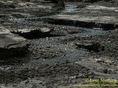 Guaje Creek Zig-Zags through Recent Sediment, Jemez Mts., New Mexico  GaujeCrZigzags5-11-04 by The Bright Edge - Photography by Anne Slattery, via Flickr